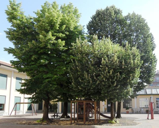 grandi alberi e area giochi